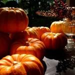 かぼちゃ人気レシピ – 簡単なのにこんなに美味しい!【洋食編】