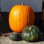 かぼちゃ人気レシピ – 簡単なのにこんなに美味しい!【和食編】