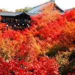 東福寺の紅葉2013 見ごろ時期とおすすめスポット