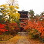 仁和寺の紅葉2013 見ごろ時期とおすすめスポット