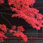 日光二荒山神社の紅葉2013 見ごろ時期とおすすめスポット