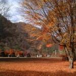 足尾・銀山平の紅葉2013 見ごろ時期とおすすめスポット