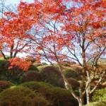箱根・蓬莱園の紅葉2013 見ごろ時期とおすすめスポット