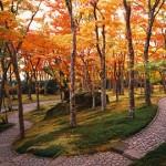 箱根美術館の紅葉2013 見ごろ時期とおすすめスポット