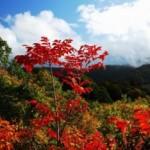 酸ヶ湯温泉・地獄沼の紅葉2013 見ごろ時期とおすすめスポット
