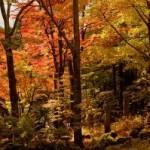 箱根仙石原・長安寺の紅葉2013 見ごろ時期とおすすめスポット