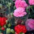 A 母の日の人気プレゼントランキング2014★40代のお母さんへ_html_m24d71b29