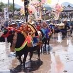 壬生の花田植がユネスコ世界遺産登録で大注目!その歴史と2014年の日程は?