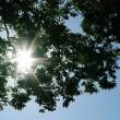 A 太陽の季節到来!日焼け対策は大丈夫??_html_1f47840e