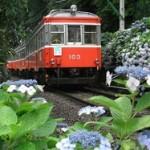 箱根登山鉄道「夜のあじさい号」の予約方法と見どころは?幻想的な夜アジサイを車窓から楽しむ完全ガイド!