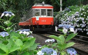 A 幻想的な夜アジサイの世界へ…箱根登山鉄道「夜のあじさい号」_html_m44ad5790