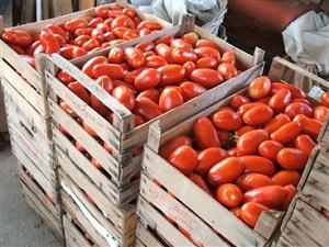 A まとめて買って、上手に保存~冷凍トマトの作り方・使い方~_html_m4fd8f2a7
