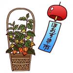 浅草寺ほおずき市2014とは?由来と狙い目の時間帯、ほおずきの価格相場も!