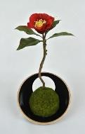 お正月飾りにも最適!苔玉の基本的な作り方をマスターしてDIYを楽しんでみよう!part2
