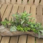 多肉植物の飾り方をマスターしてお部屋のインテリアに取り入れてみよう!