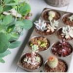 多肉植物がある暮らし!飾り方を真似しておしゃれなインテリアにpart5